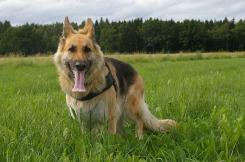 dog-992497_640